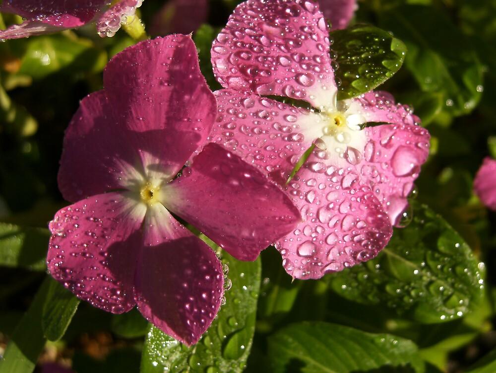 Flower Drops by cj913