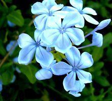 Blue Daze by cj913