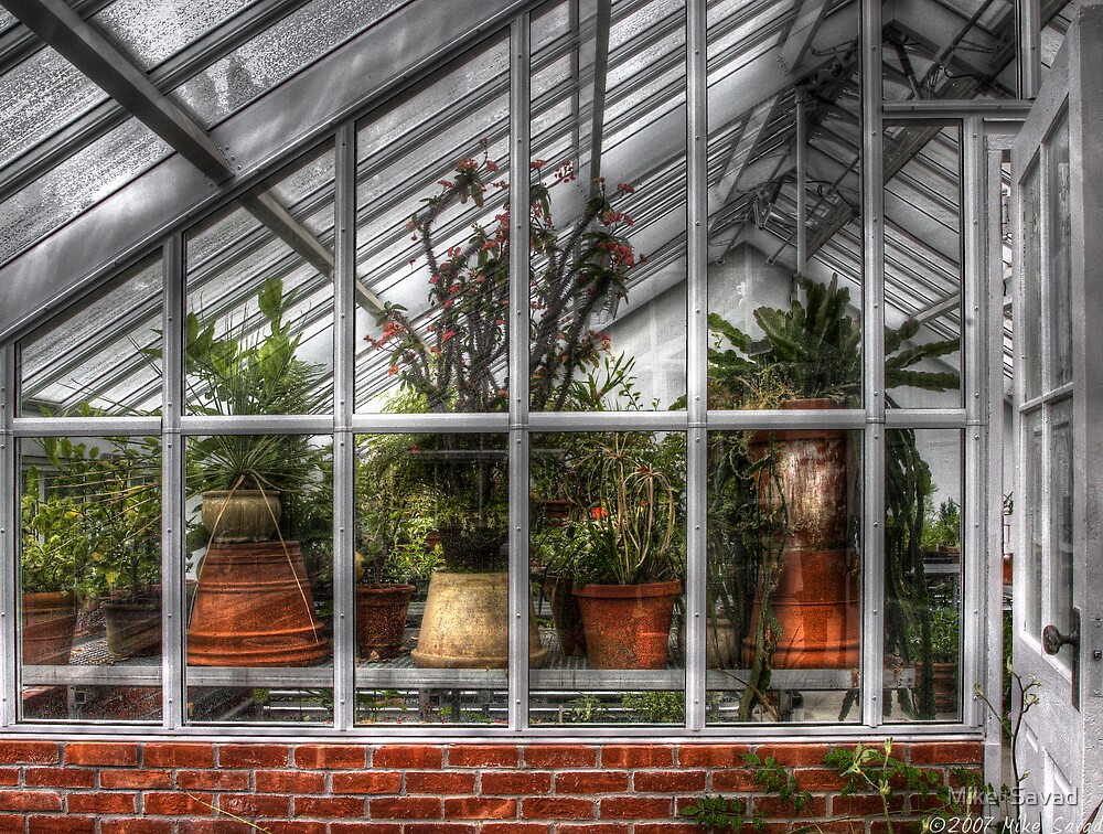Flower Pots by Mike  Savad