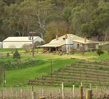 Home among the vines by Graham Houghton
