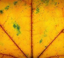 Life Blood (Autumn Foliage IV) by David Lamb