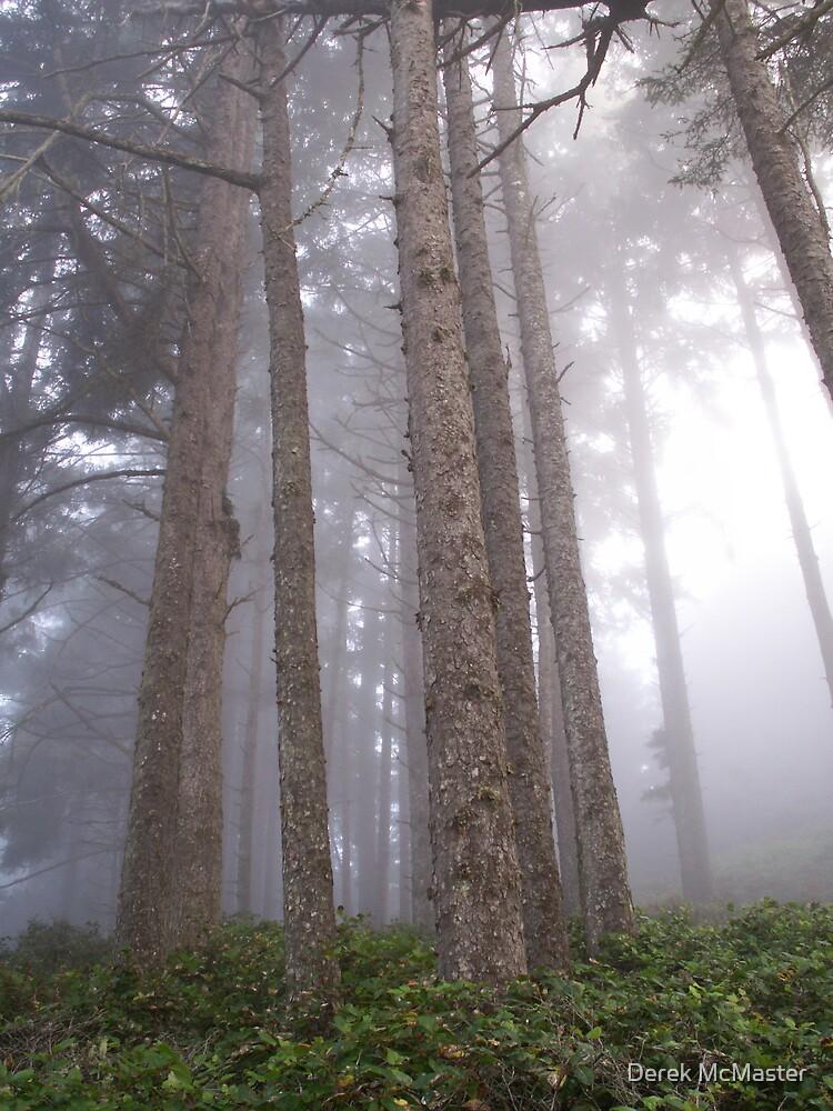 Trees in Fog by Derek McMaster