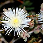 Fairy Flower Dust by Vanessa  Warren