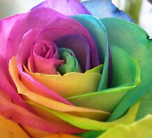 COLOURFUL ROSE by gracestout2007