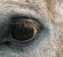 Got my Eye on You by Robyn Maynard