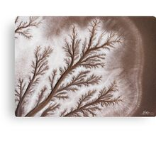 Feathered Riverbed Canvas Print