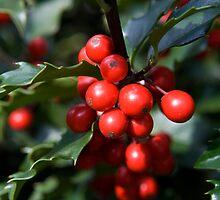 Holly Seasons Greetings by jenndes