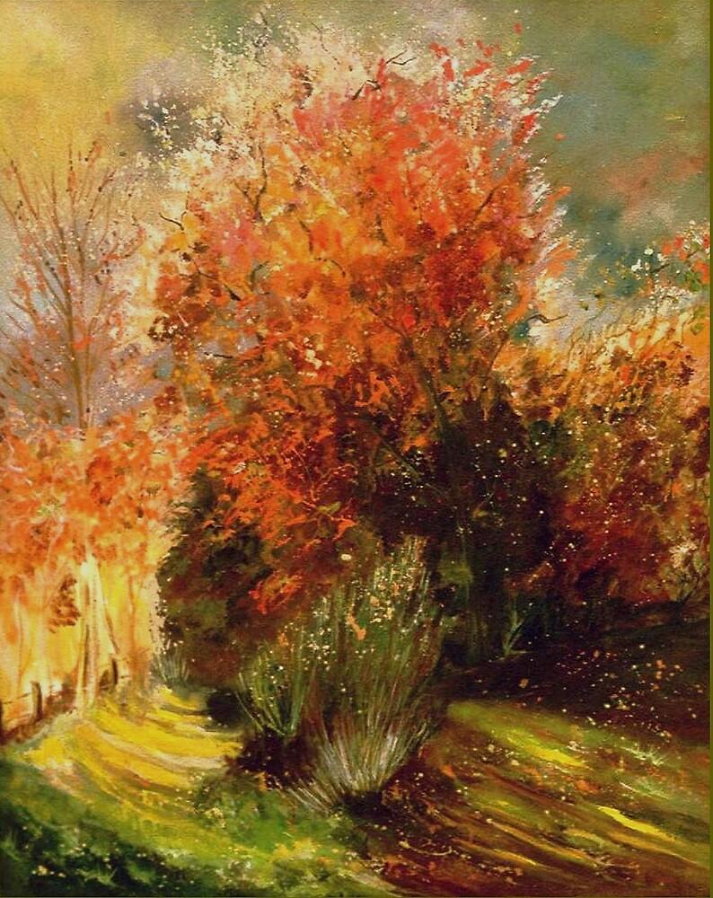 Orange bush by calimero