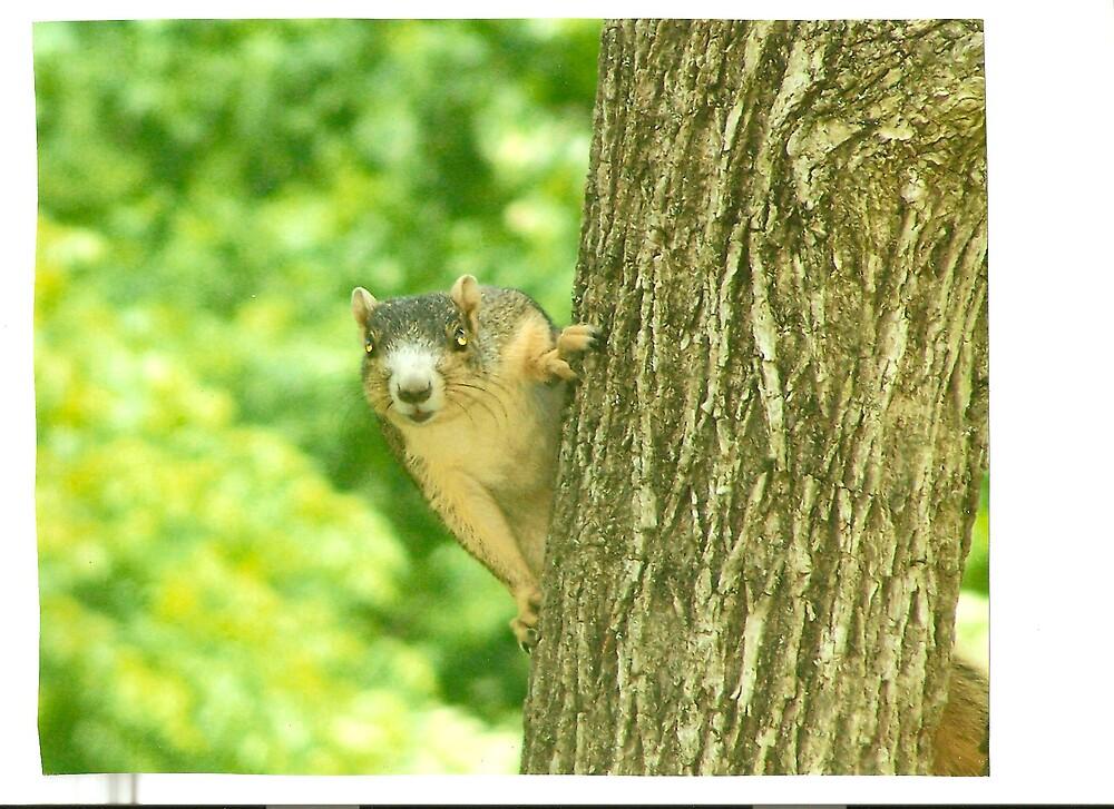 squirrel by robin willis