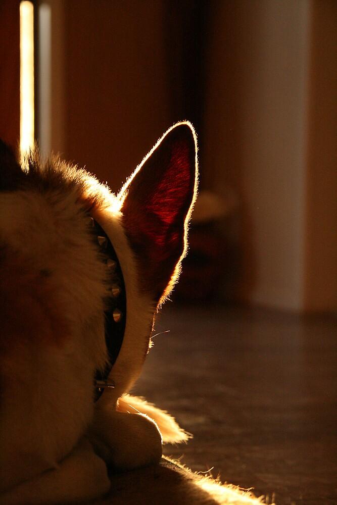 A Dog's Ear by Nicmutt