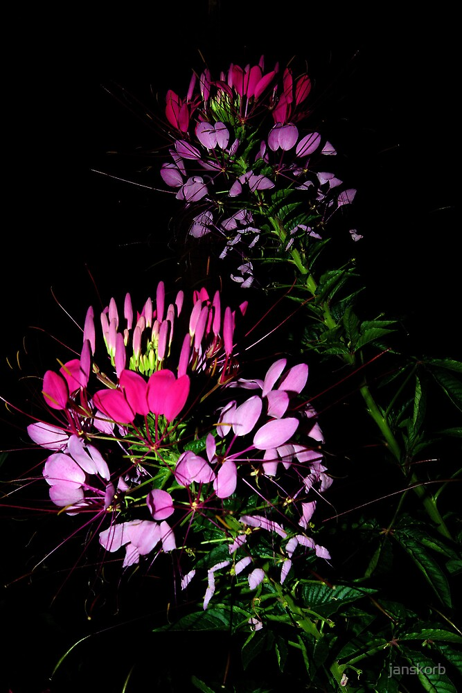 Flowers  in the night by janskorb