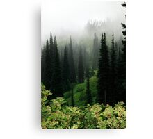 Sub-alpine pasture,  Mt Rainier National Park, Washington State Canvas Print