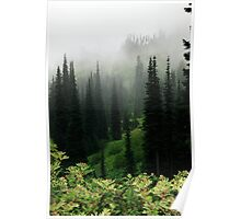 Sub-alpine pasture,  Mt Rainier National Park, Washington State Poster