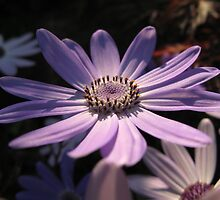 Senetti Sun by jadegreenimage