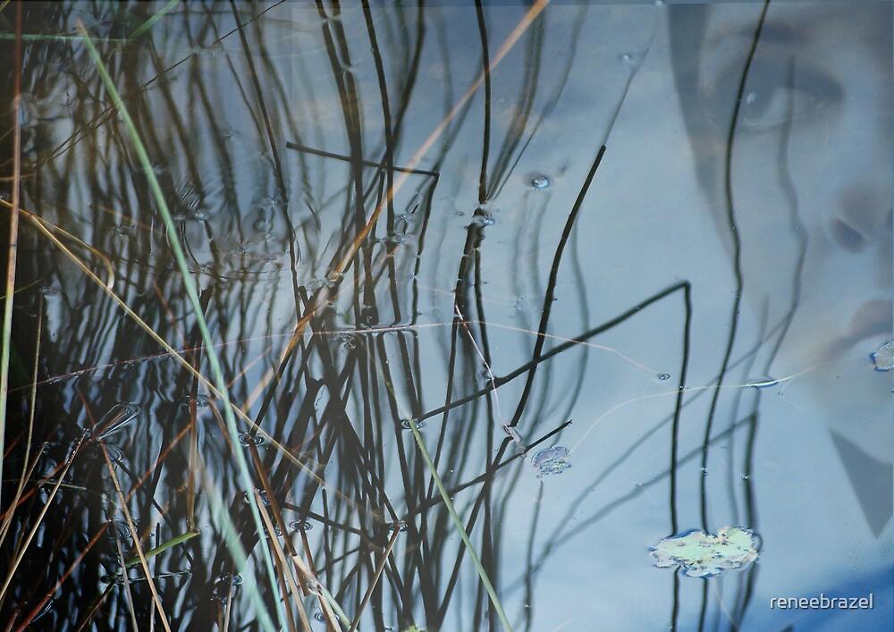 reflection by reneebrazel