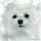 Snowdrop the Maltese - White on White by Morag Bates