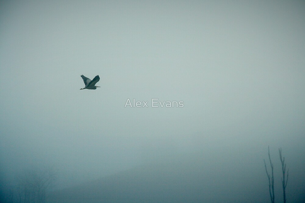 Herron in the Fog by Alex Evans