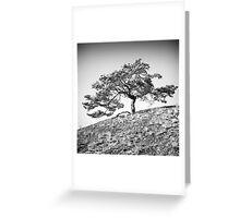 Pinus sylvestris Greeting Card