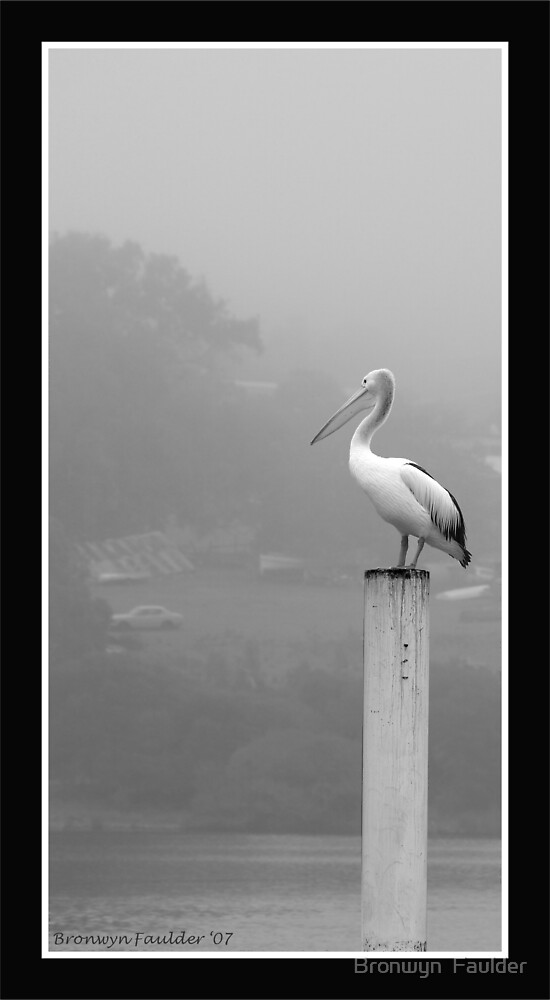Pelican in the Mist by Bronwyn  Faulder