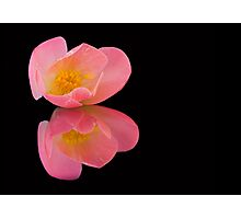 Dreamy Camelia Photographic Print
