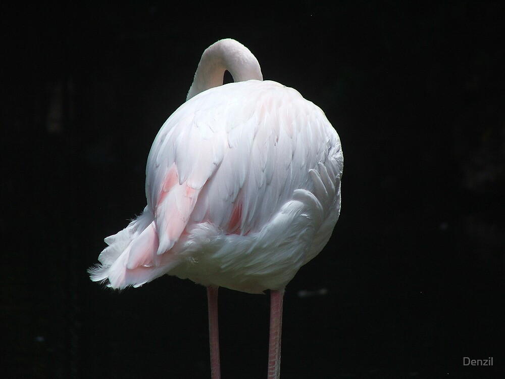 flamingo by Denzil