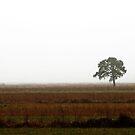 26.11.2014: Pine tree in Fog by Petri Volanen