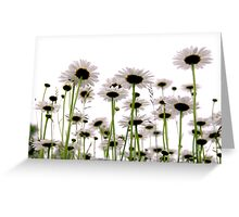 Daisies on white Greeting Card