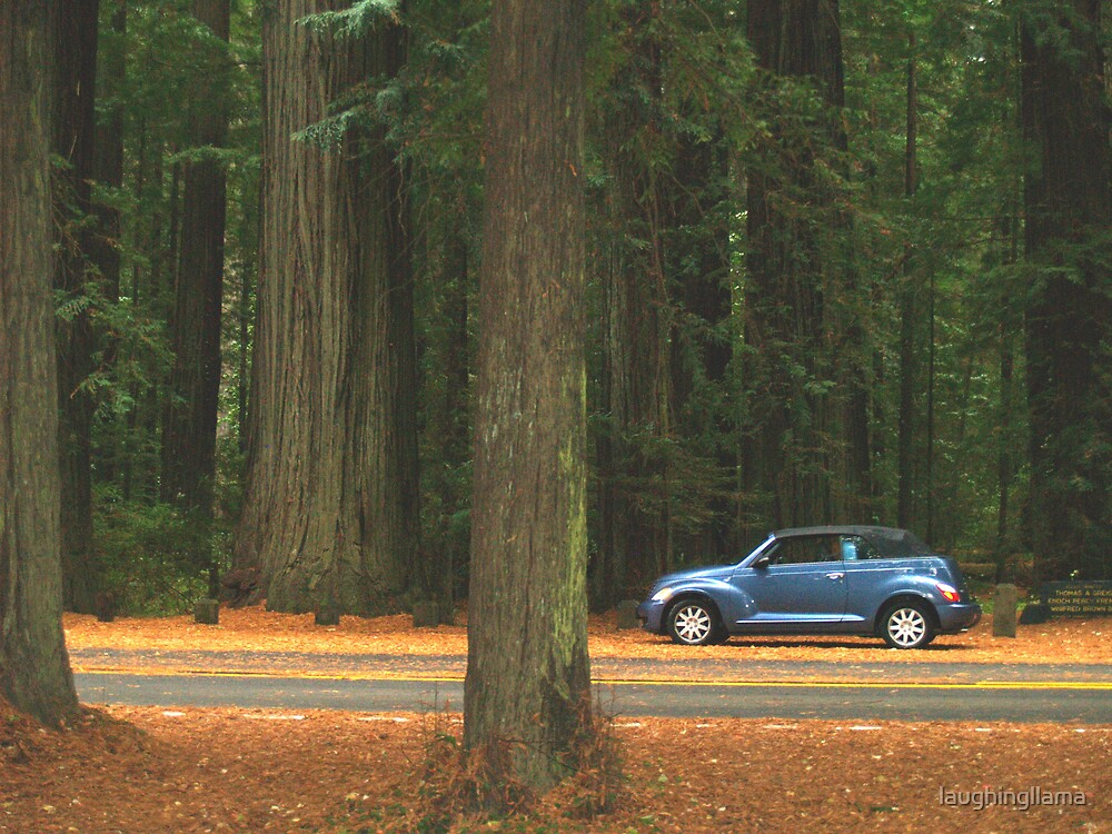 Avenue of the Giants by laughingllama