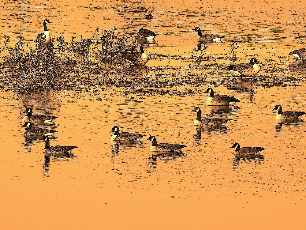Canada Geese In Orange by Gene Cyr