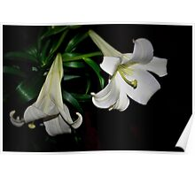 Two white lilies Poster