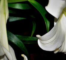 Two white lilies Sticker