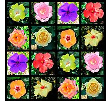 BEAUTIFUL FLOWER PHOTO COLLAGE Photographic Print