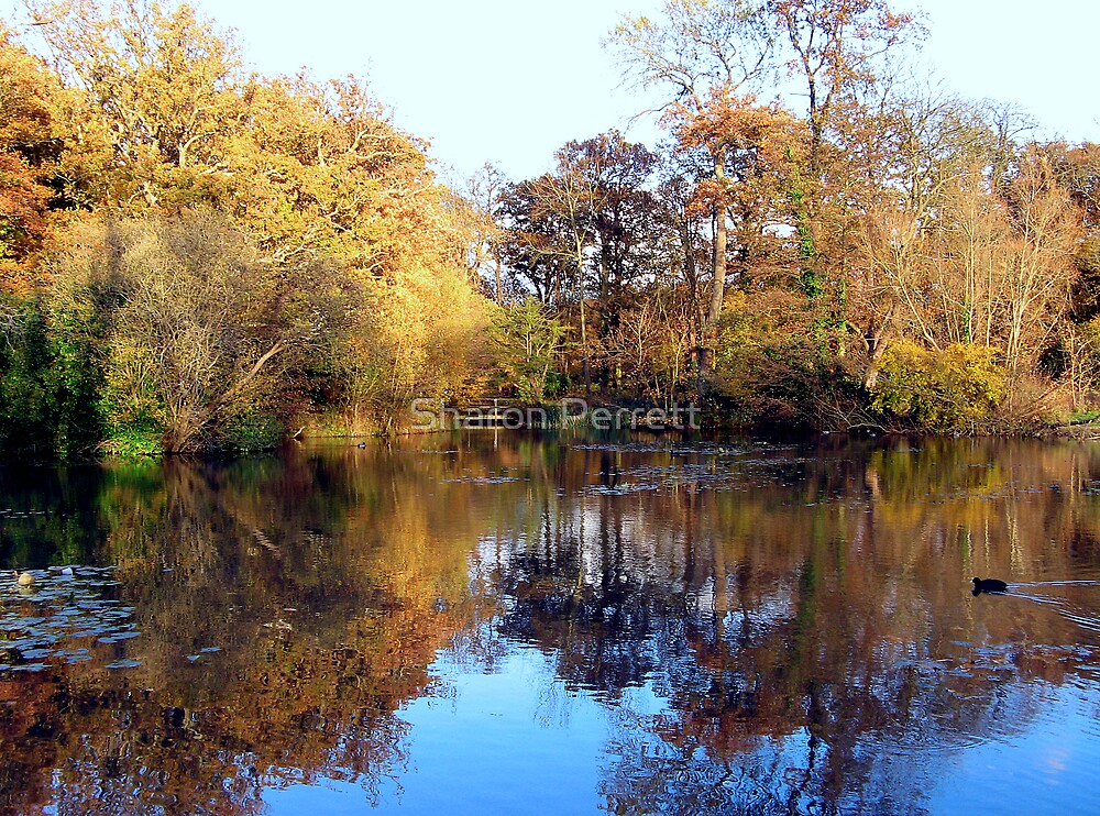 Autumn at Leigh Park Gardens by Sharon Perrett