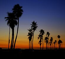 Palm Sunset by dale427