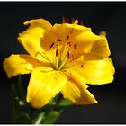Mellow Yellow by MY Scotland