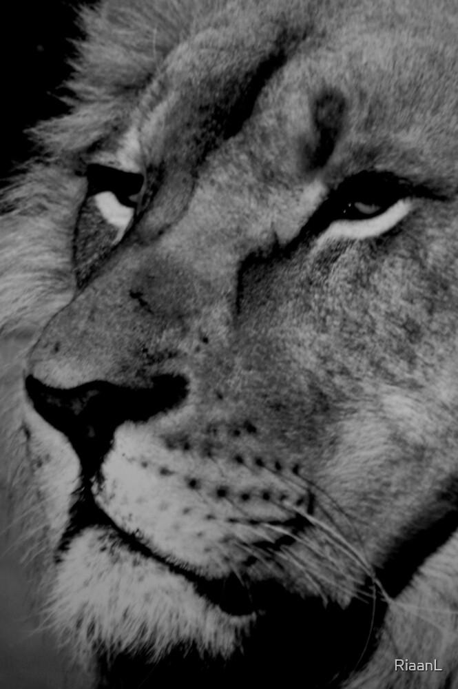 I am King (B&W) by RiaanL