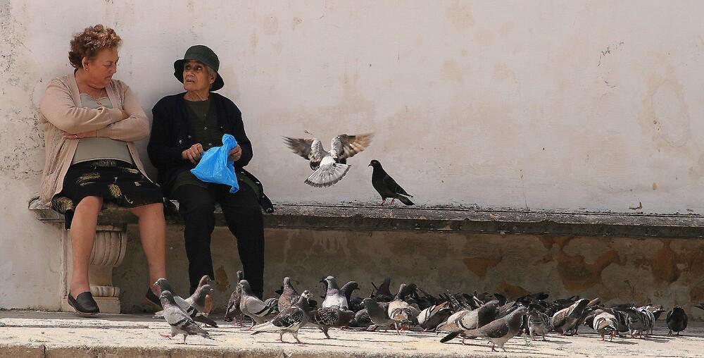 Feeding the Birds by Beamer