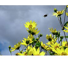 Stormy Flowers Photographic Print