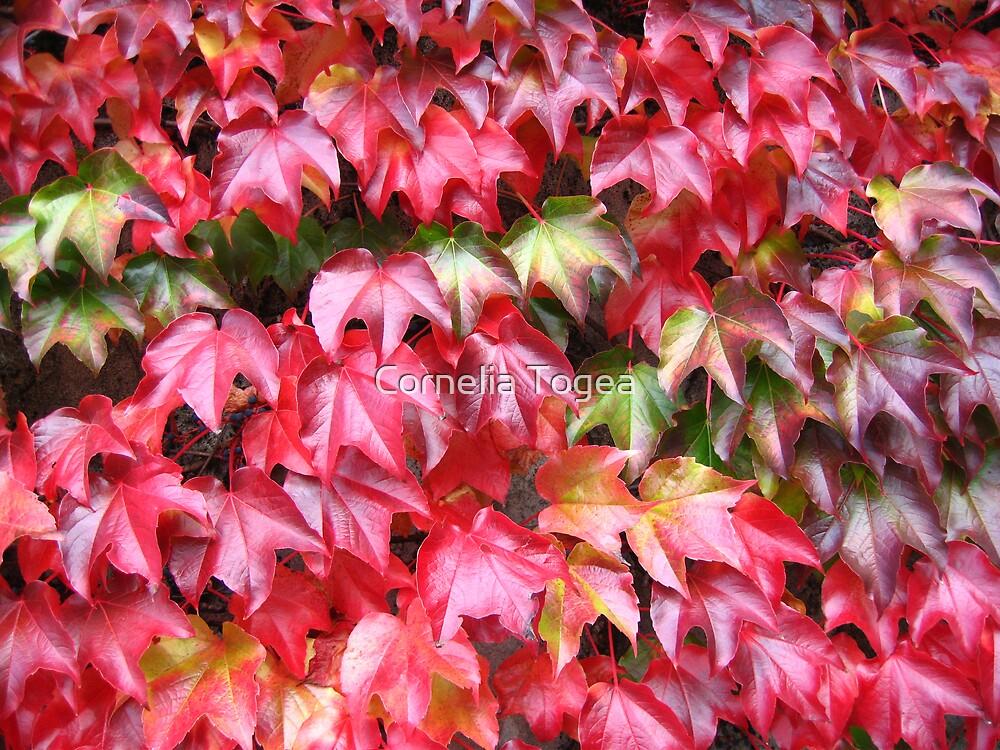 autumn ivy by Cornelia Togea