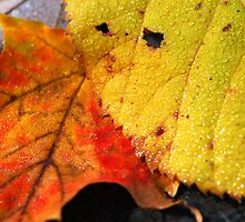 Autumn leaves macro by Elena Elisseeva