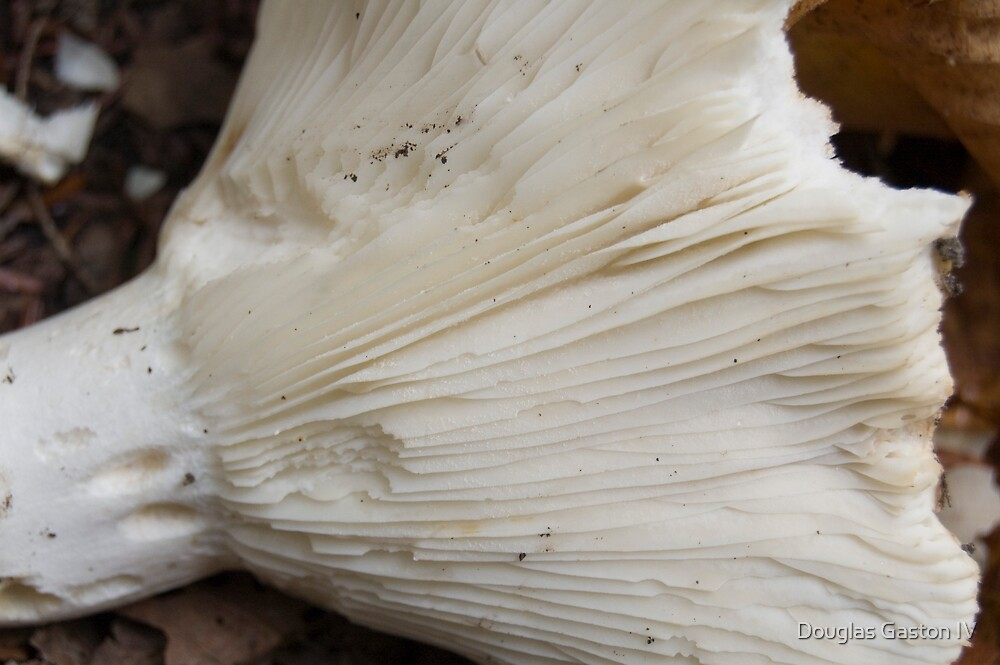 Mushroom by Douglas Gaston IV