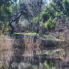 Pond Refelctions by Imagery