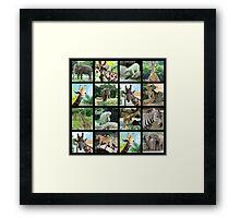 ANIMAL SAFARI PHOTO DESIGN Framed Print