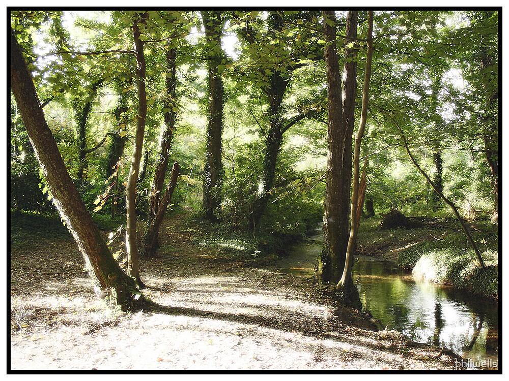 Secret Grove by philwells