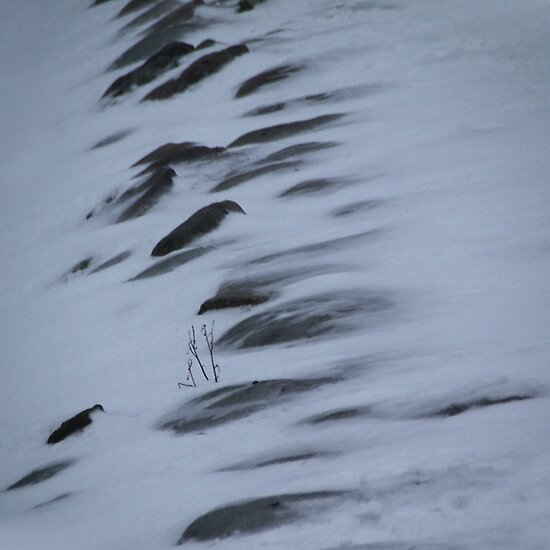 Icy winds by Bluesrose