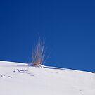 Grass on Blue by mymamiya