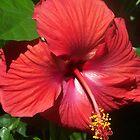 red flower by randi1972