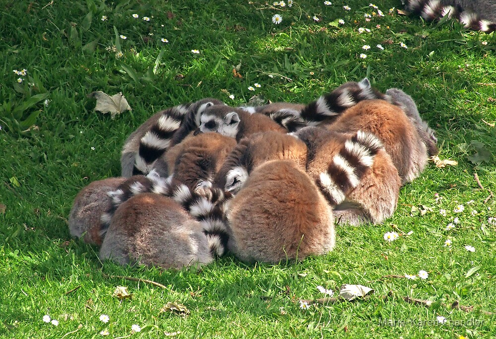 Lemurs by Marie-Karen Chandler