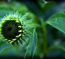 Green Piece by Tanya B. Schroeder