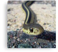 Snake up Close 985 Canvas Print